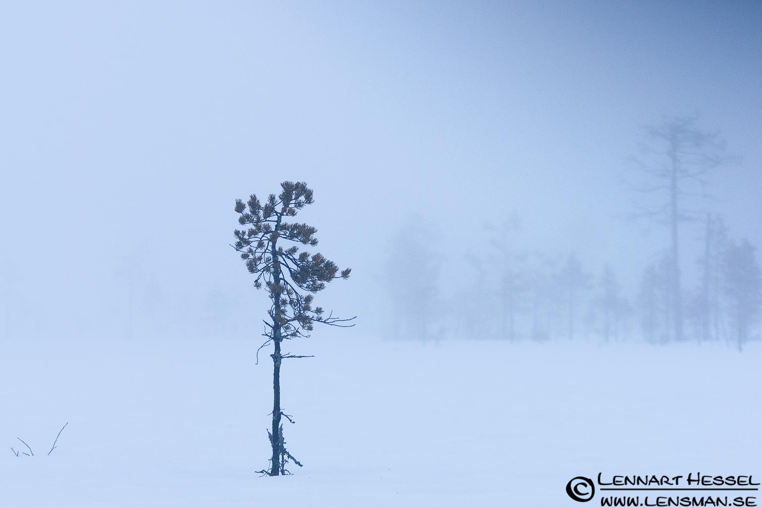 Misty Taiga in Finland