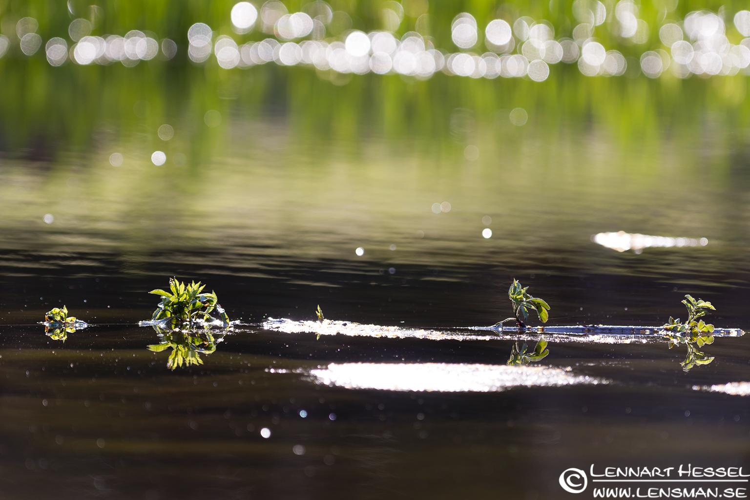 The small pond in Slottskogen, Gothenburg lucky shot
