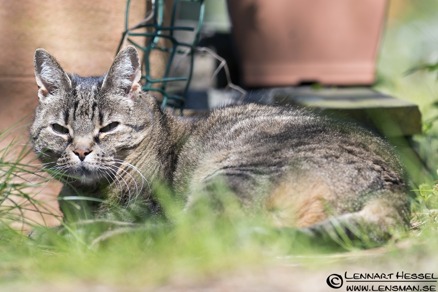 Hokus the cat lazy