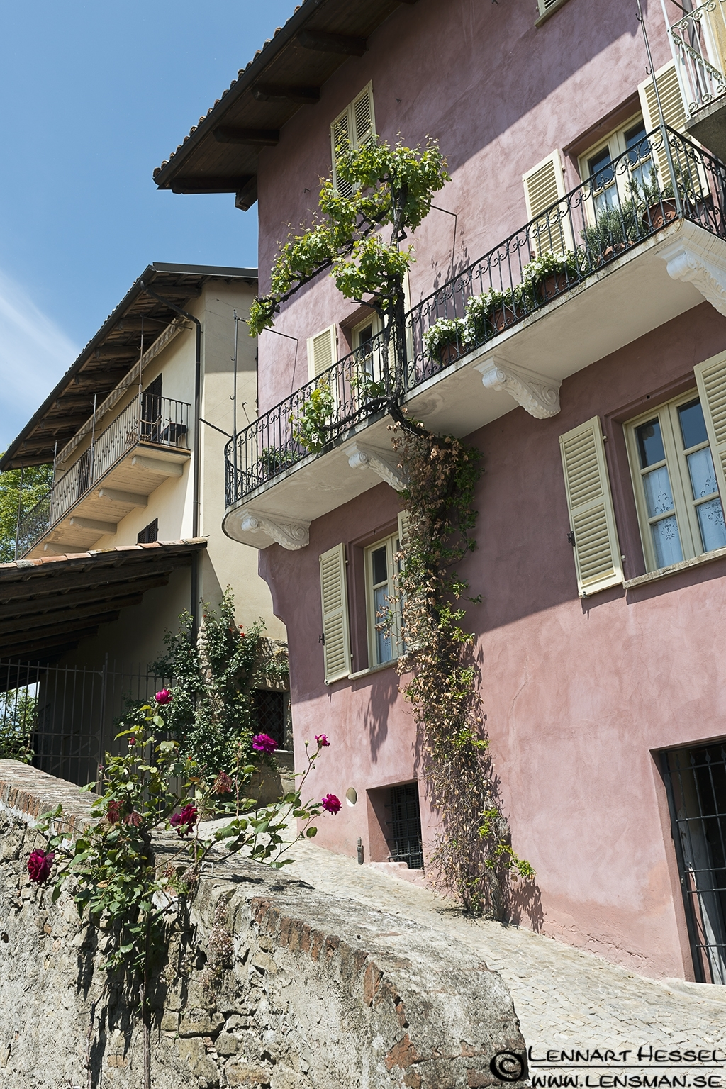 Balcony grapes in Piedmont, Italy