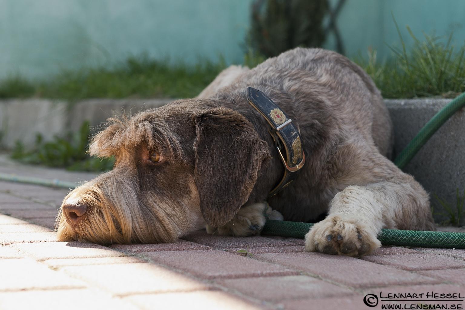 Argo resting in Piedmont, Italy