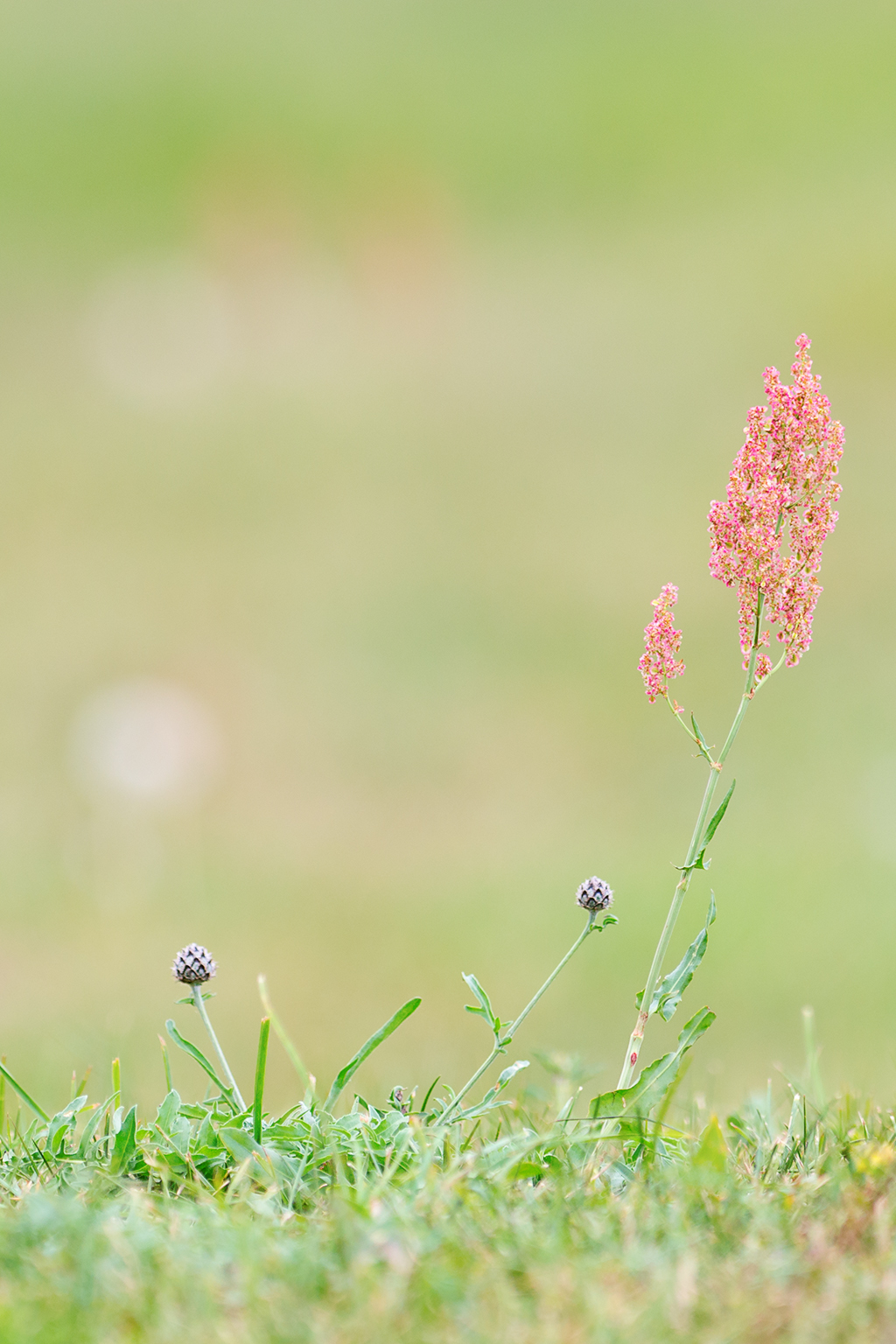 Grass Öland 2012