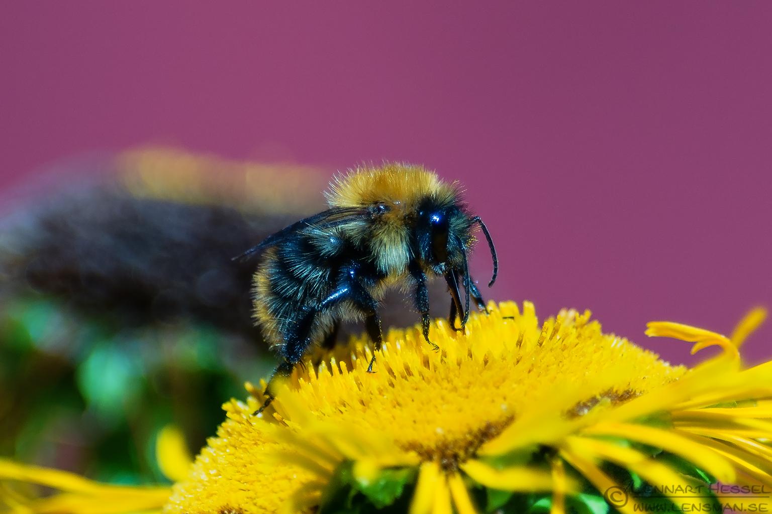 Bee Öland 2012