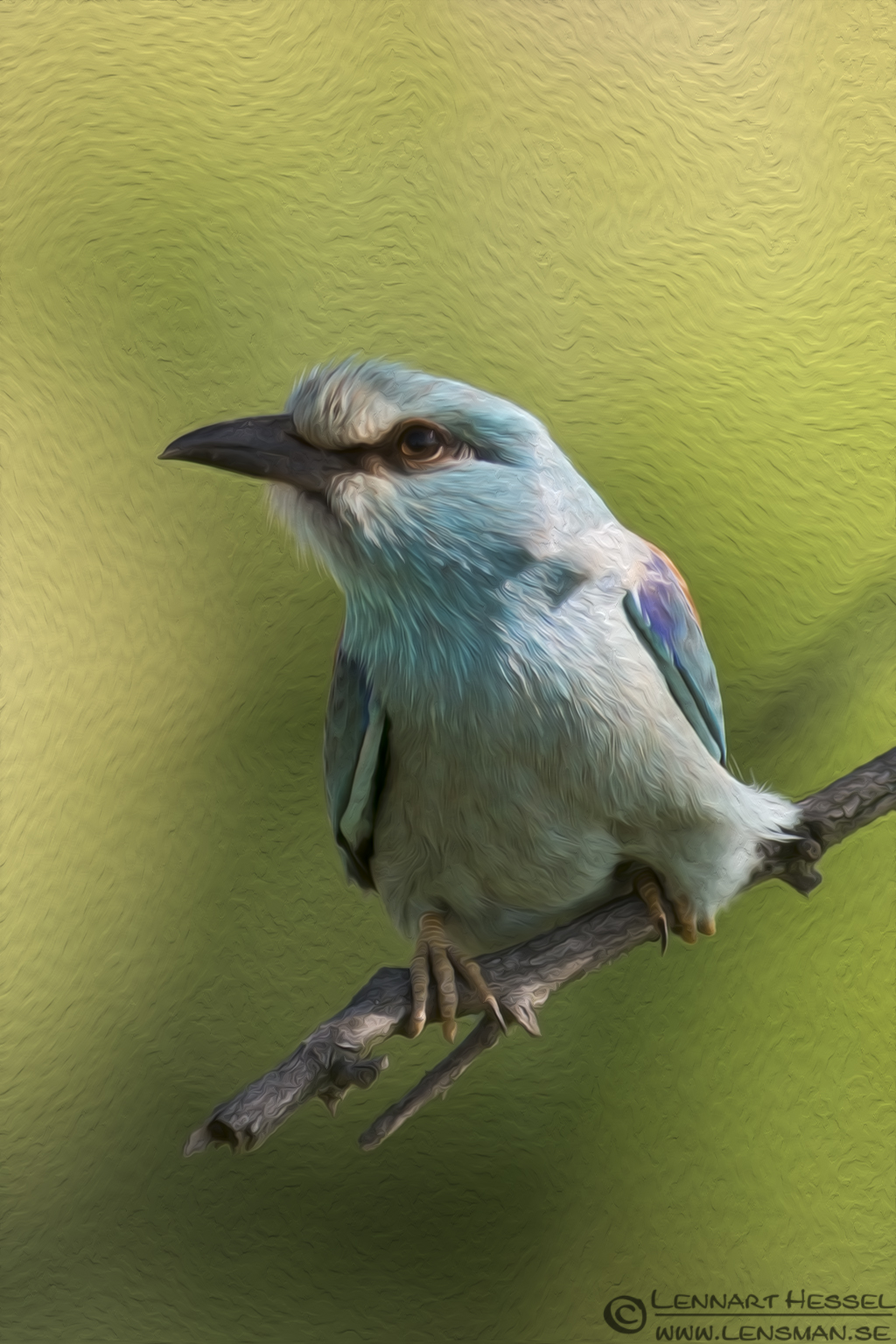 Oil painting of a European Roller from Hungary