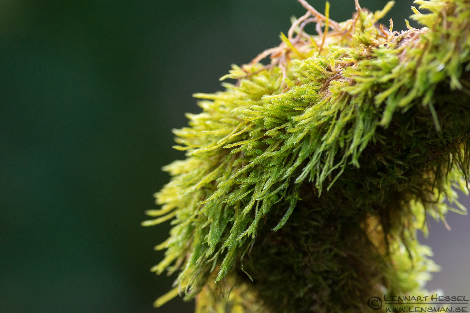 Moss photo from Gothenburgs Botanical Garden. testing