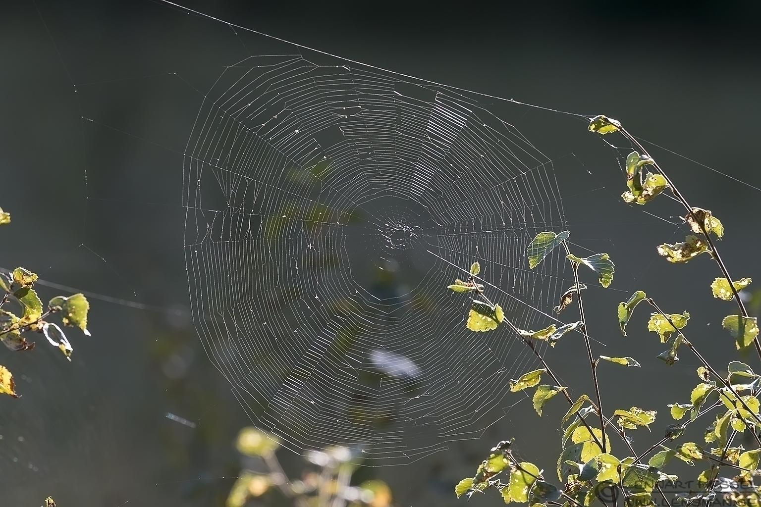 Spiderweb change