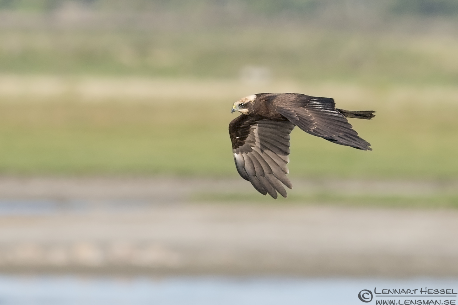March Harrier hectic