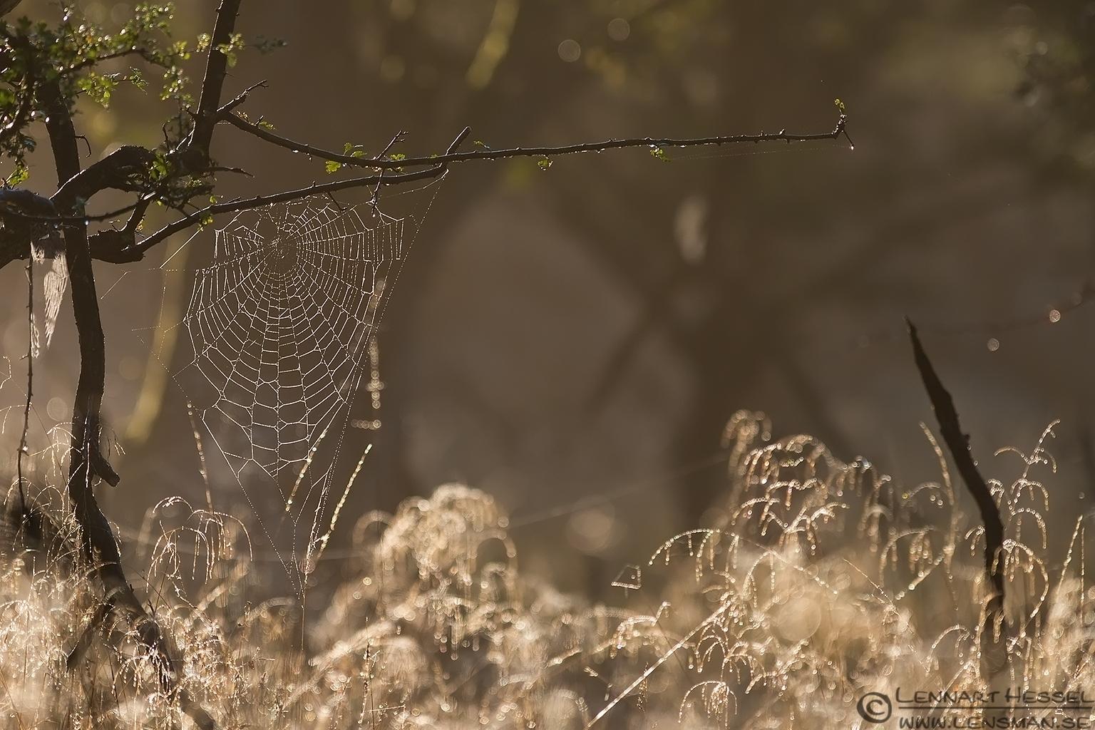 Spider web weekend