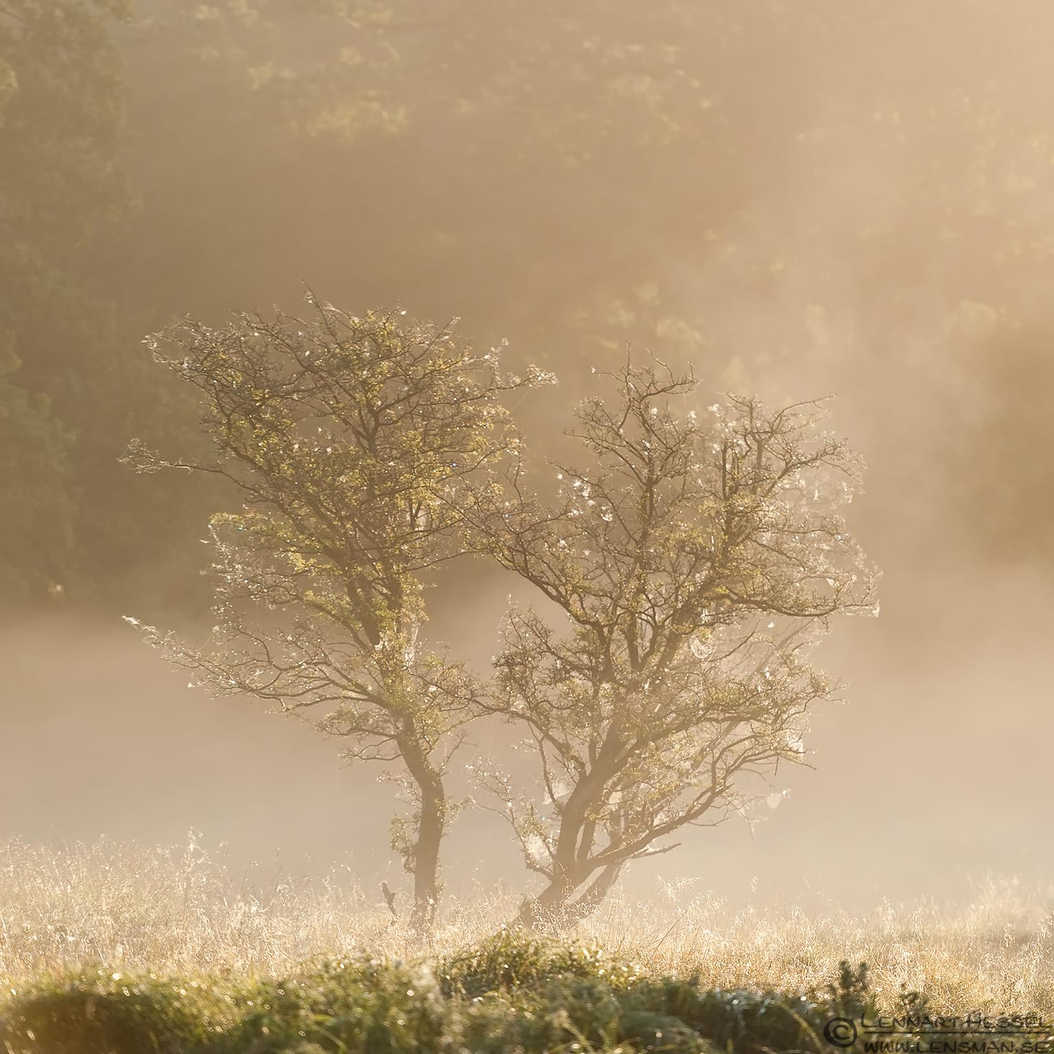 Tree in the mist weekend