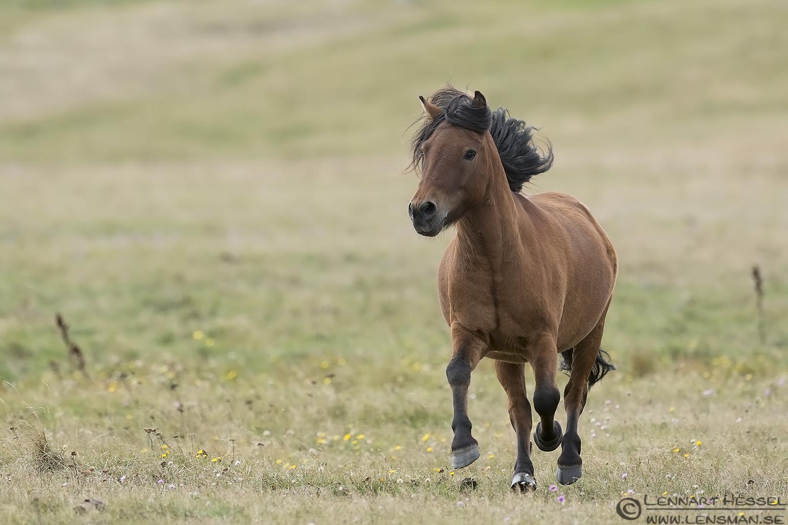Running Horse Kingfisher