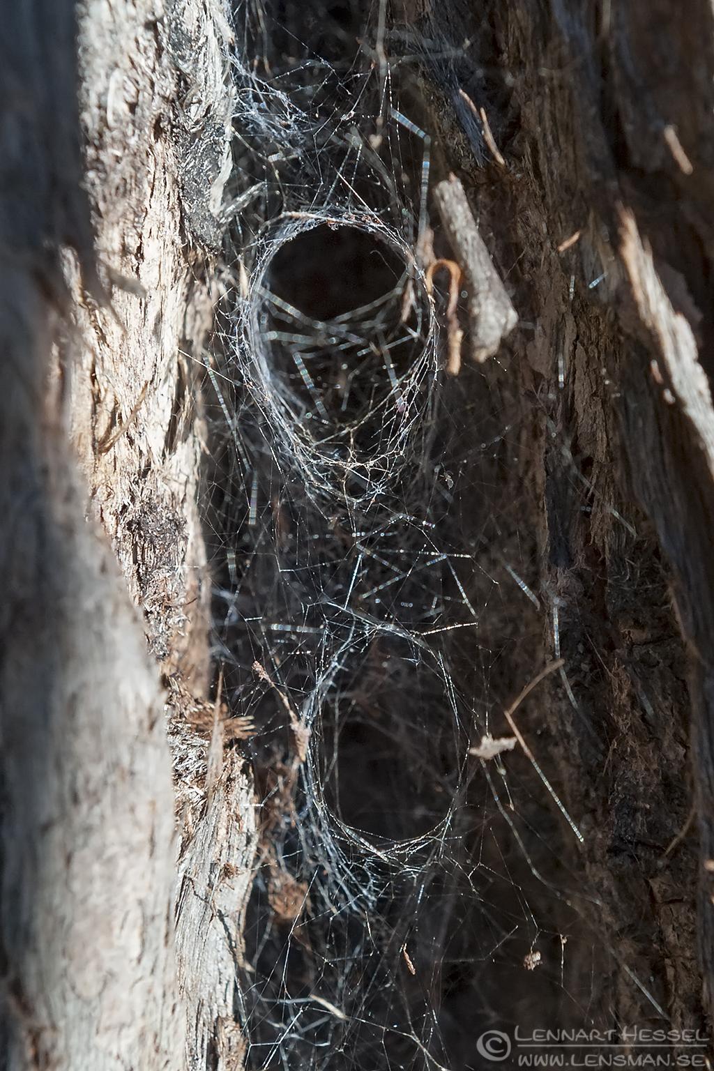 Funnel-web falls