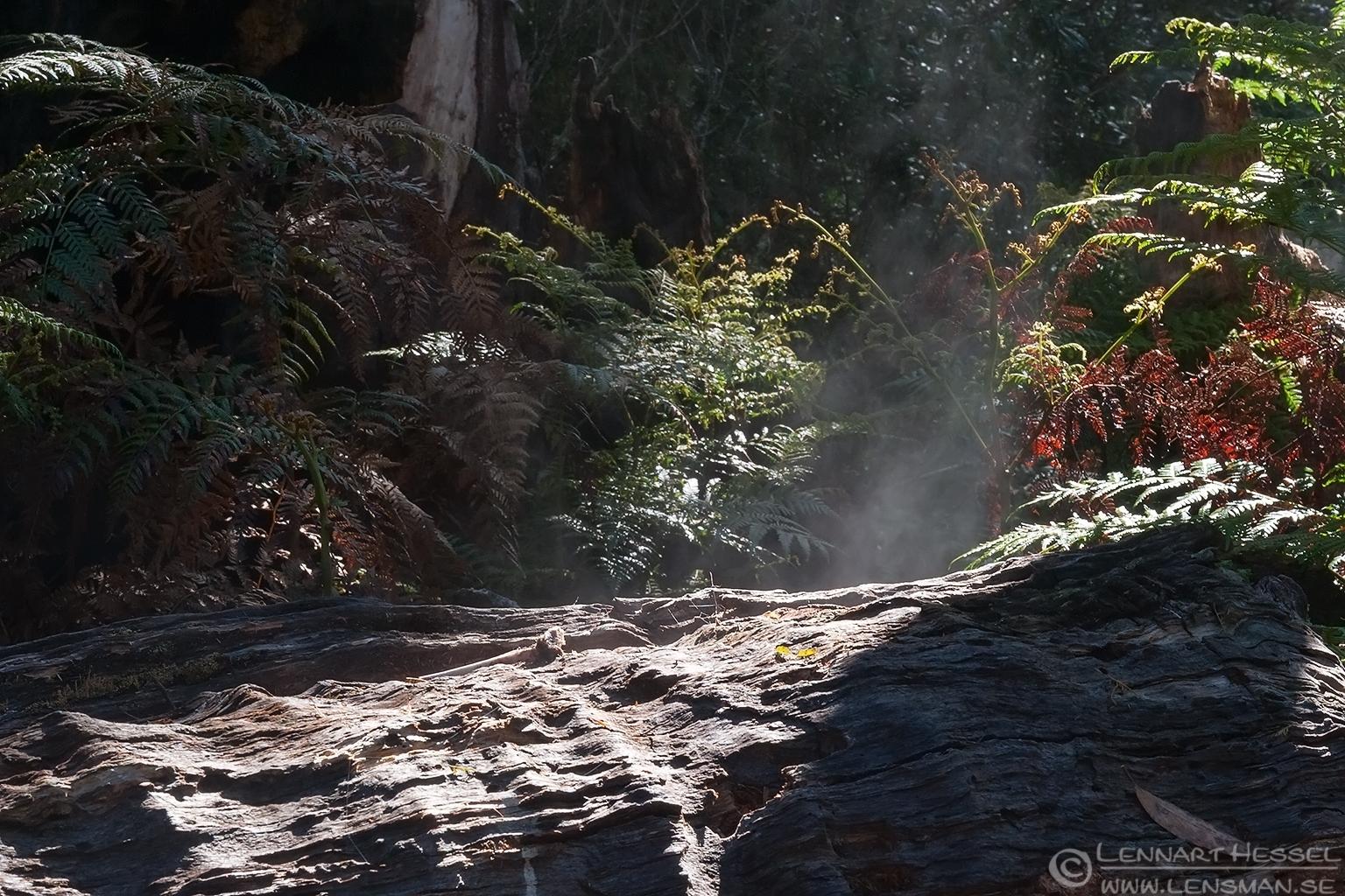 Smoking log Liffey Falls