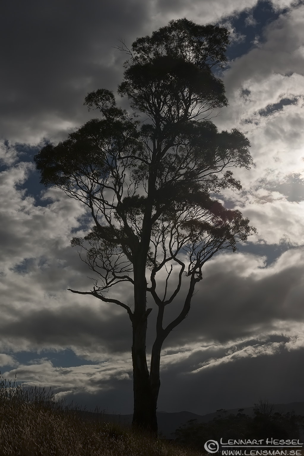 Lonely tree Bruny Island