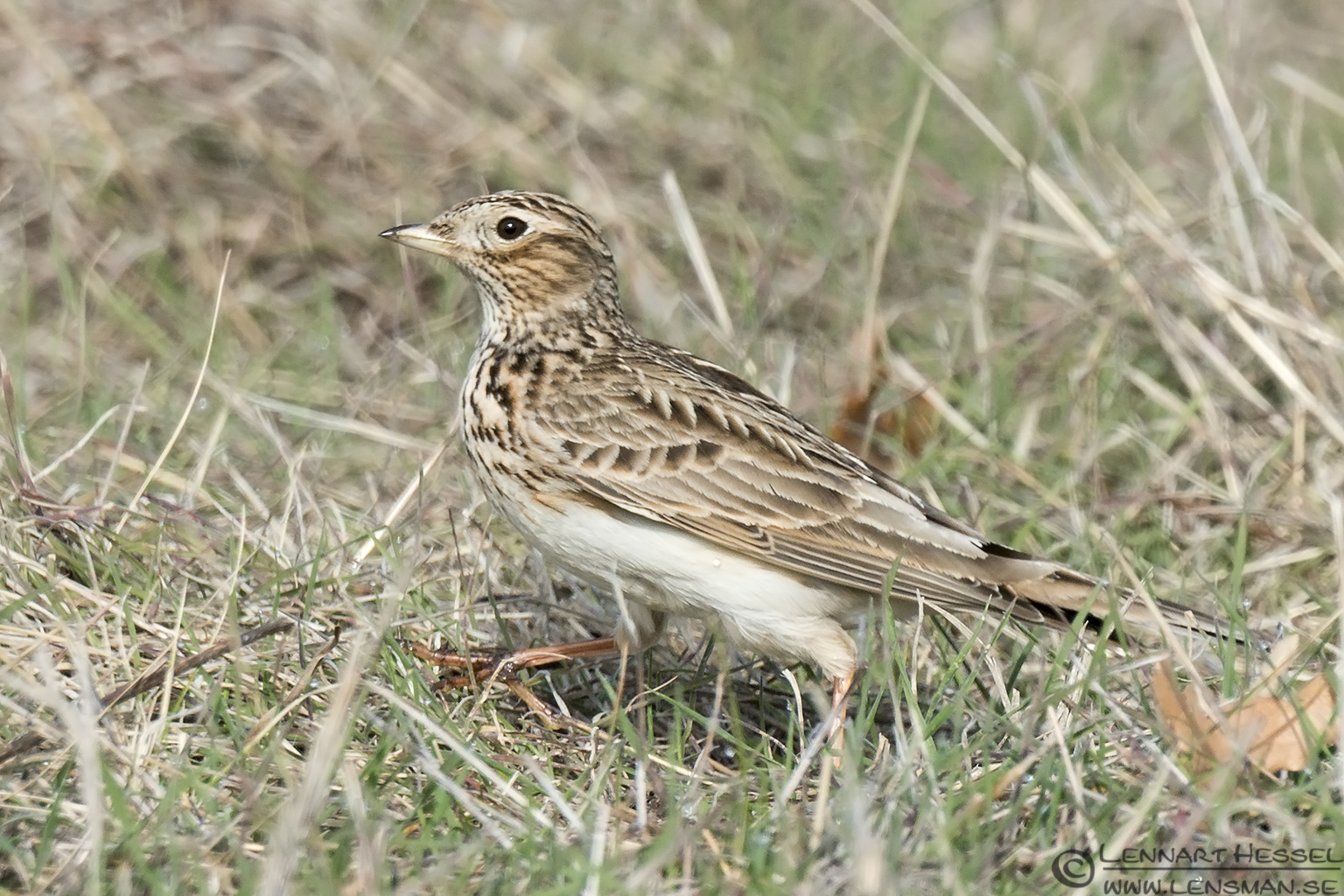 Woodlark Bulgaria