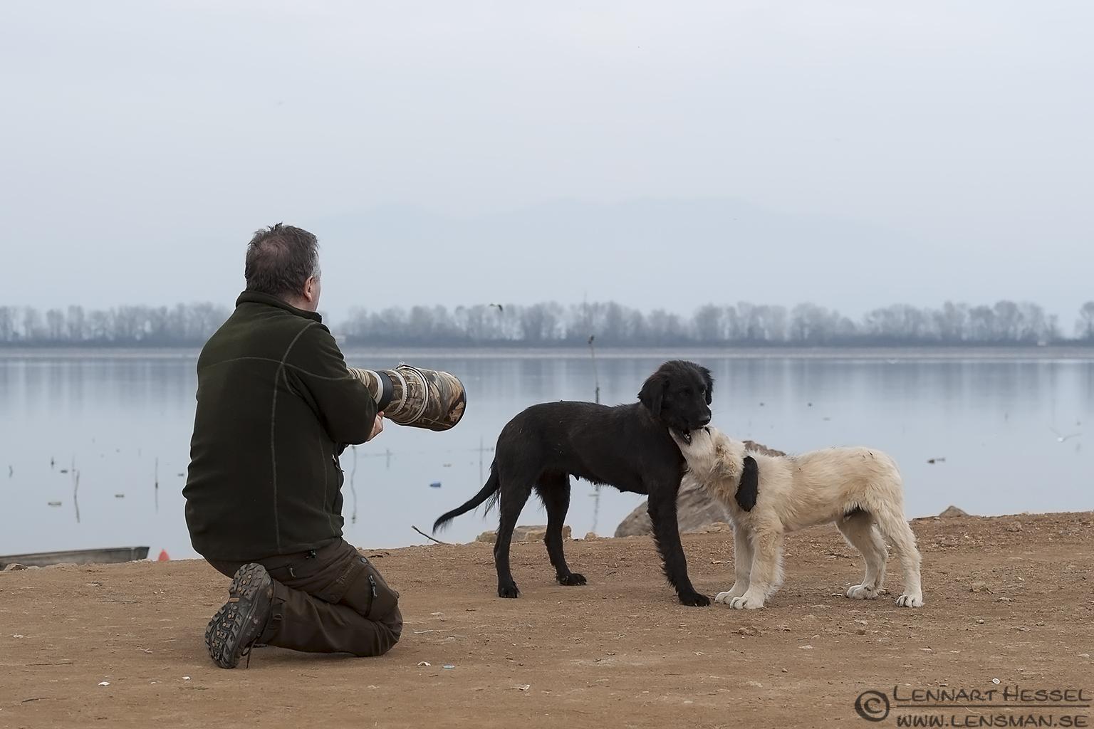 PLaying dogs Lake Kerkini