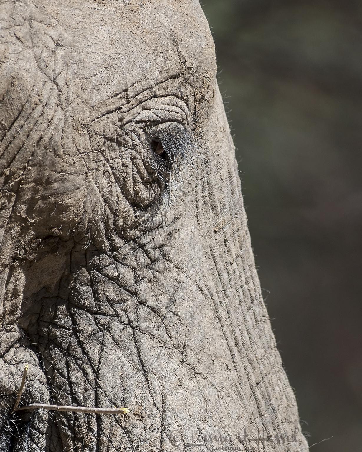 Elephant eye Mana Pools National Park, Zimbabwe