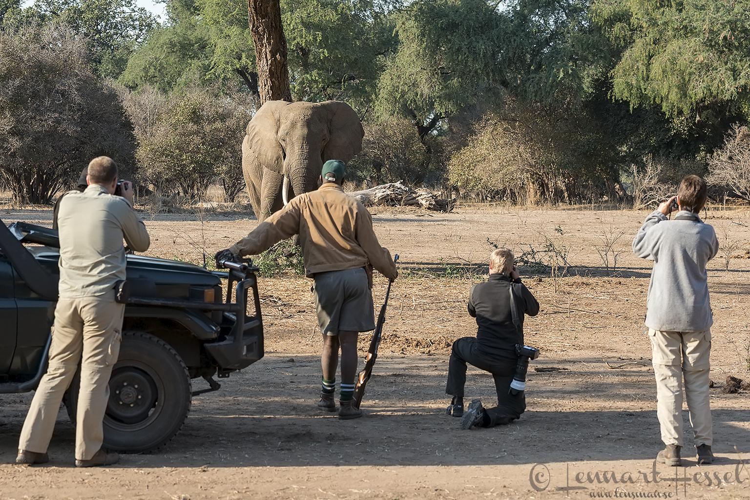 giants Mana Pools National Park, Zimbabwe