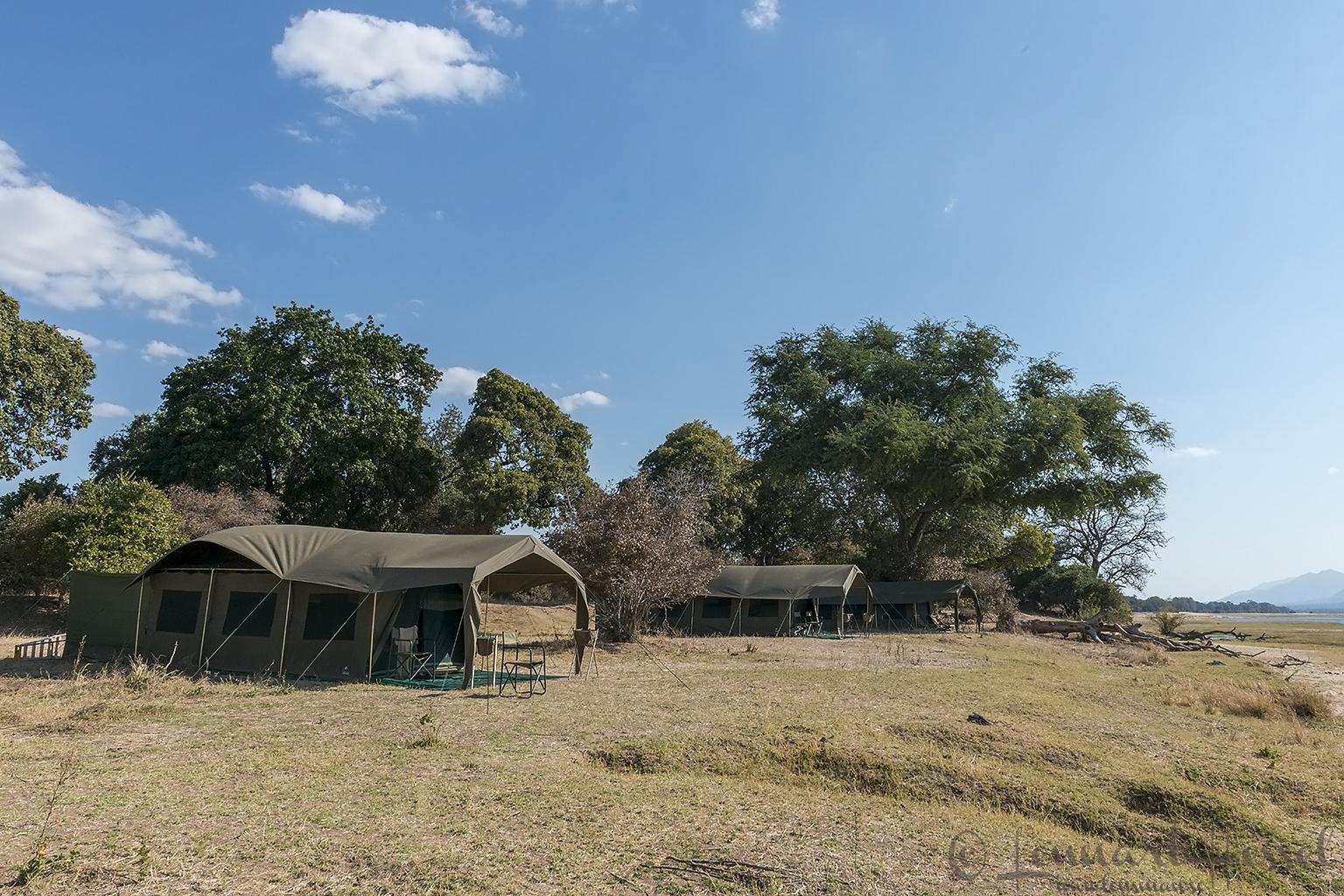 The camp giants Mana Pools National Park, Zimbabwe