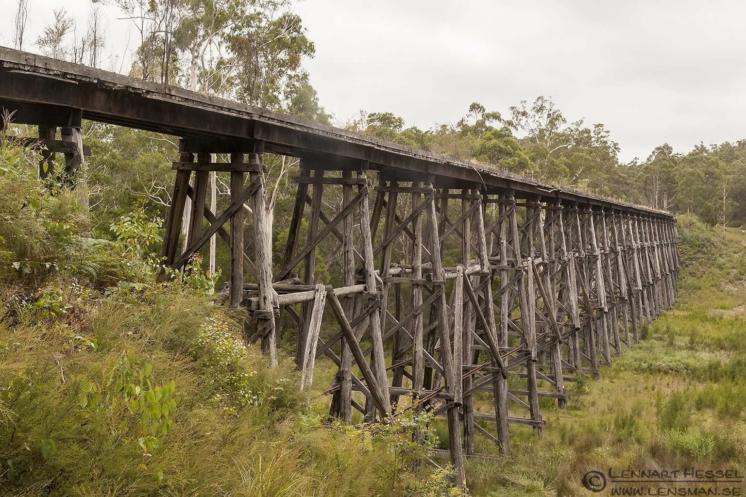 Old Trestle Bridge Australia Victoria