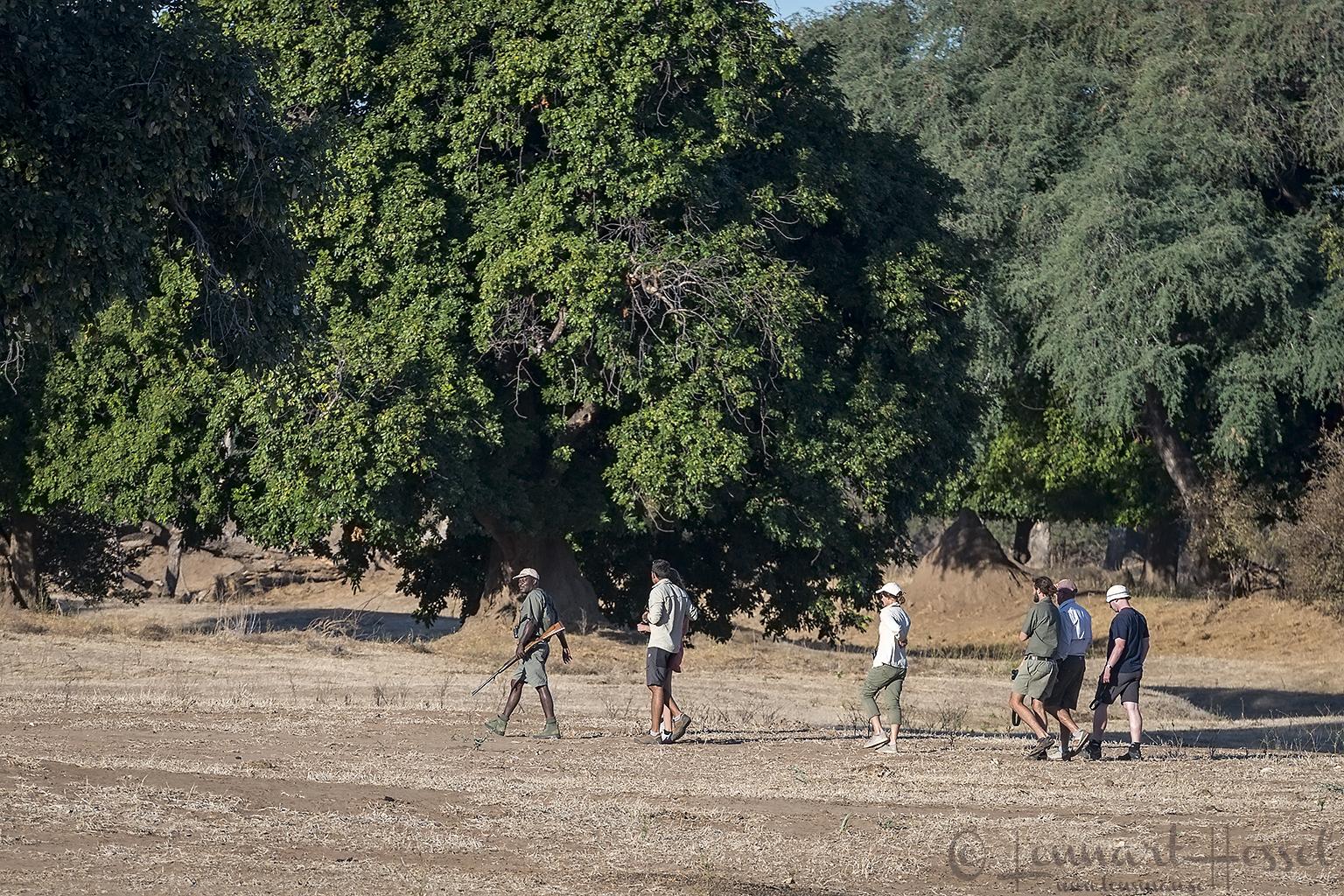 Game walk Mana Pools National Park Zimbabwe