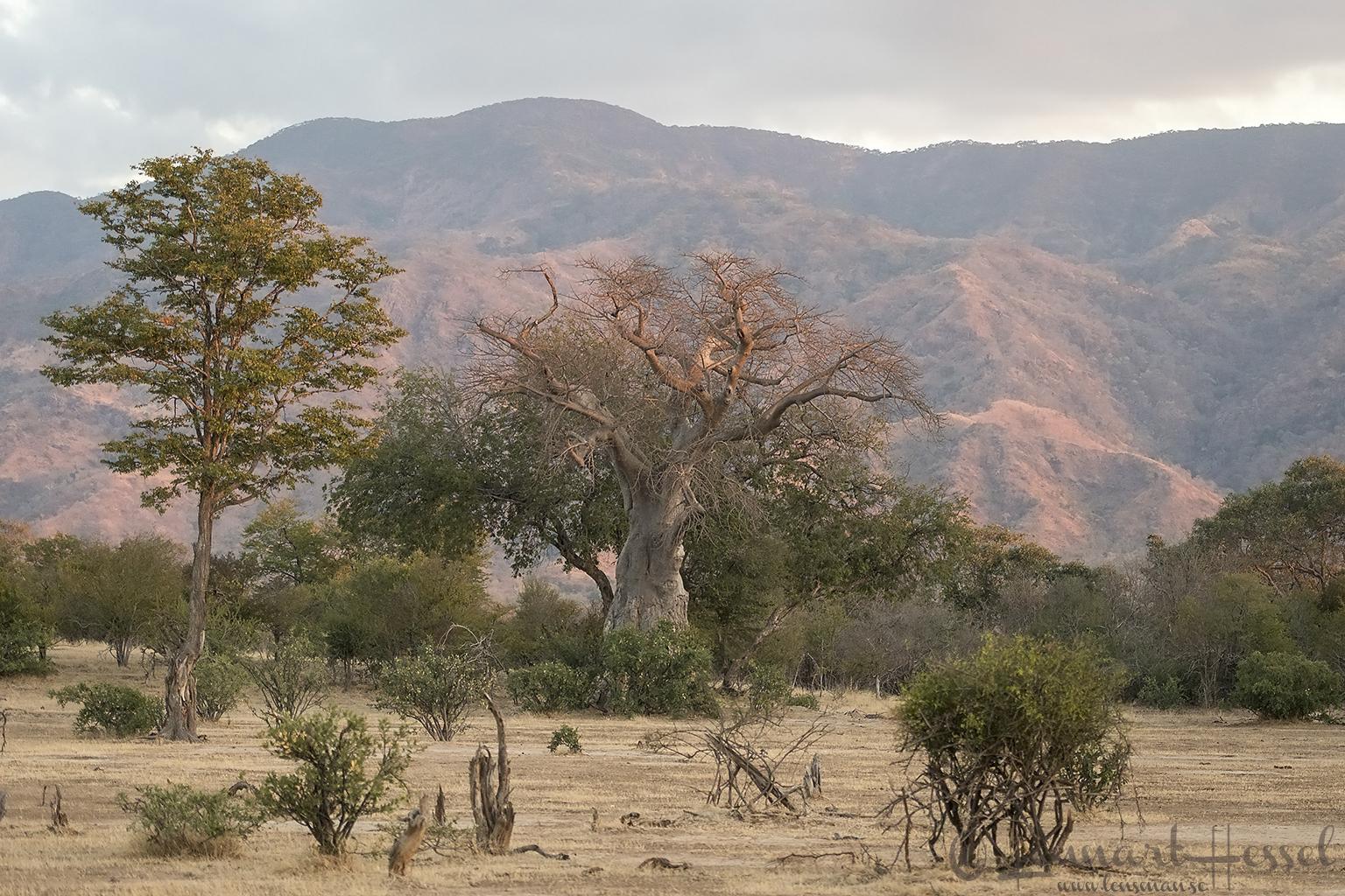 Habitat Mana Pools National Park Zimbabwe