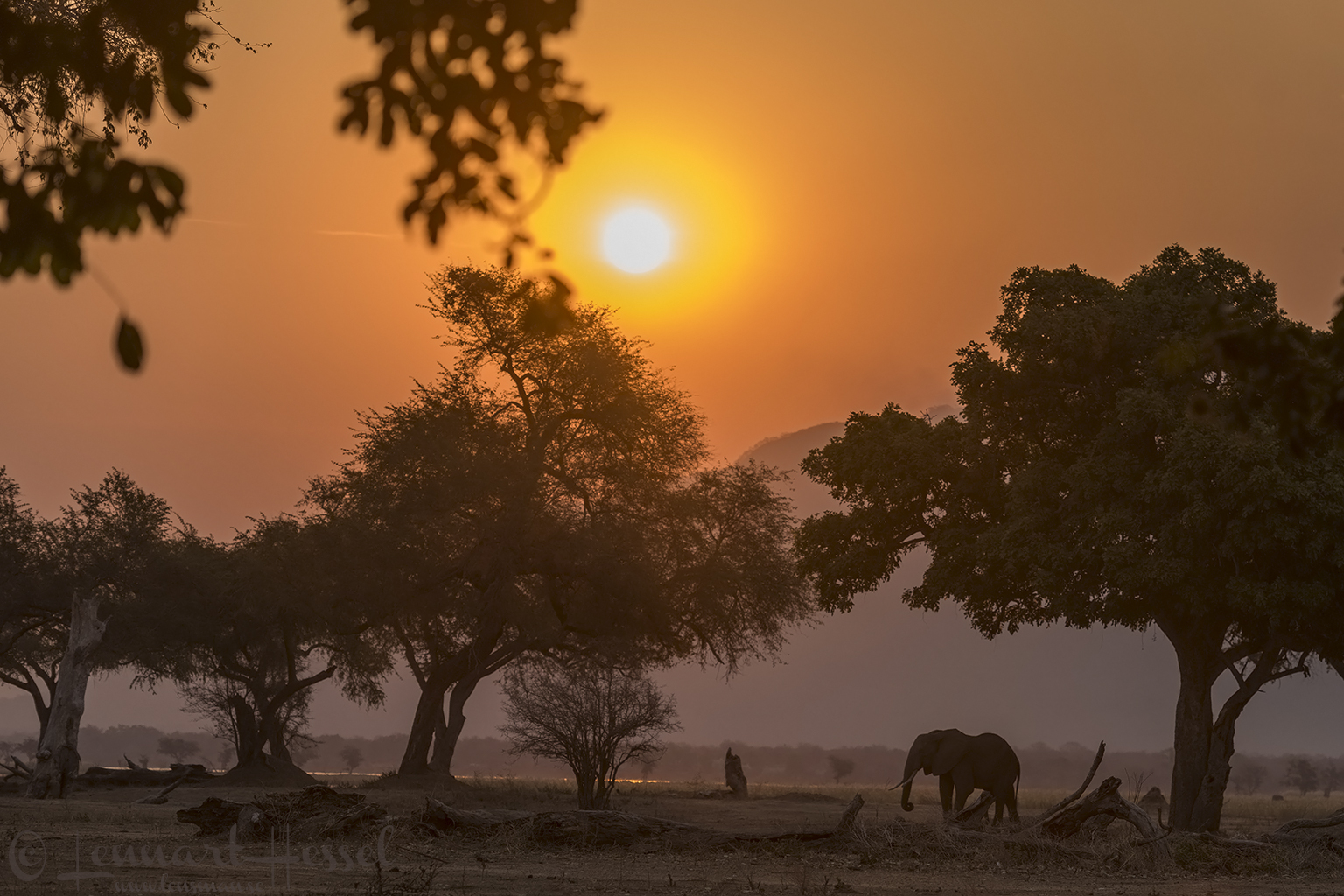 Elephant at sunset Mana Pools 2015 Mana Pools National Park