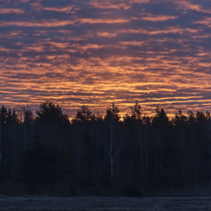 Sunrise sunny
