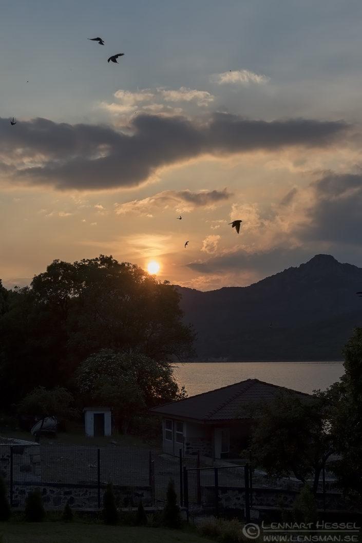 Vista and BArn Swallows Bulgaria 2016