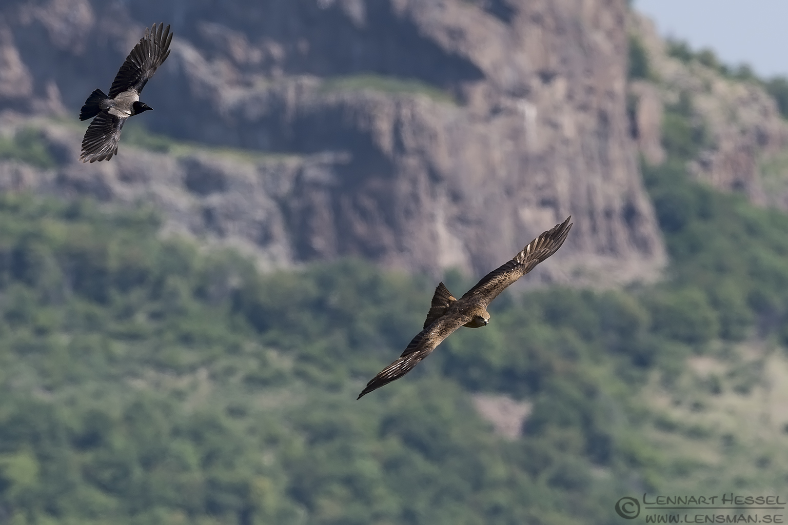 Black Kite and Hooded Crow Bulgaria 2016