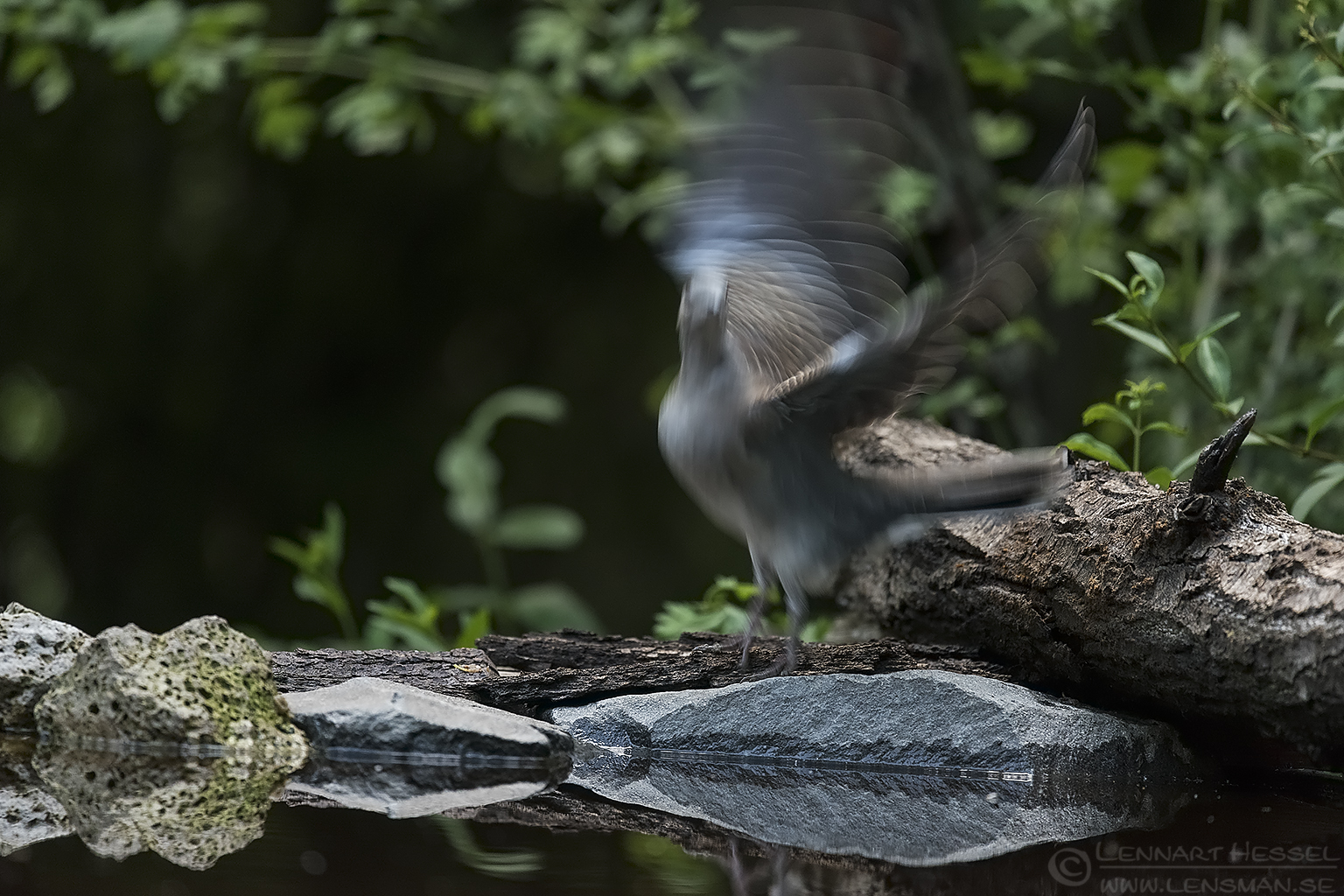 European Turtle Dove Hungary Bee-eater Bonanza