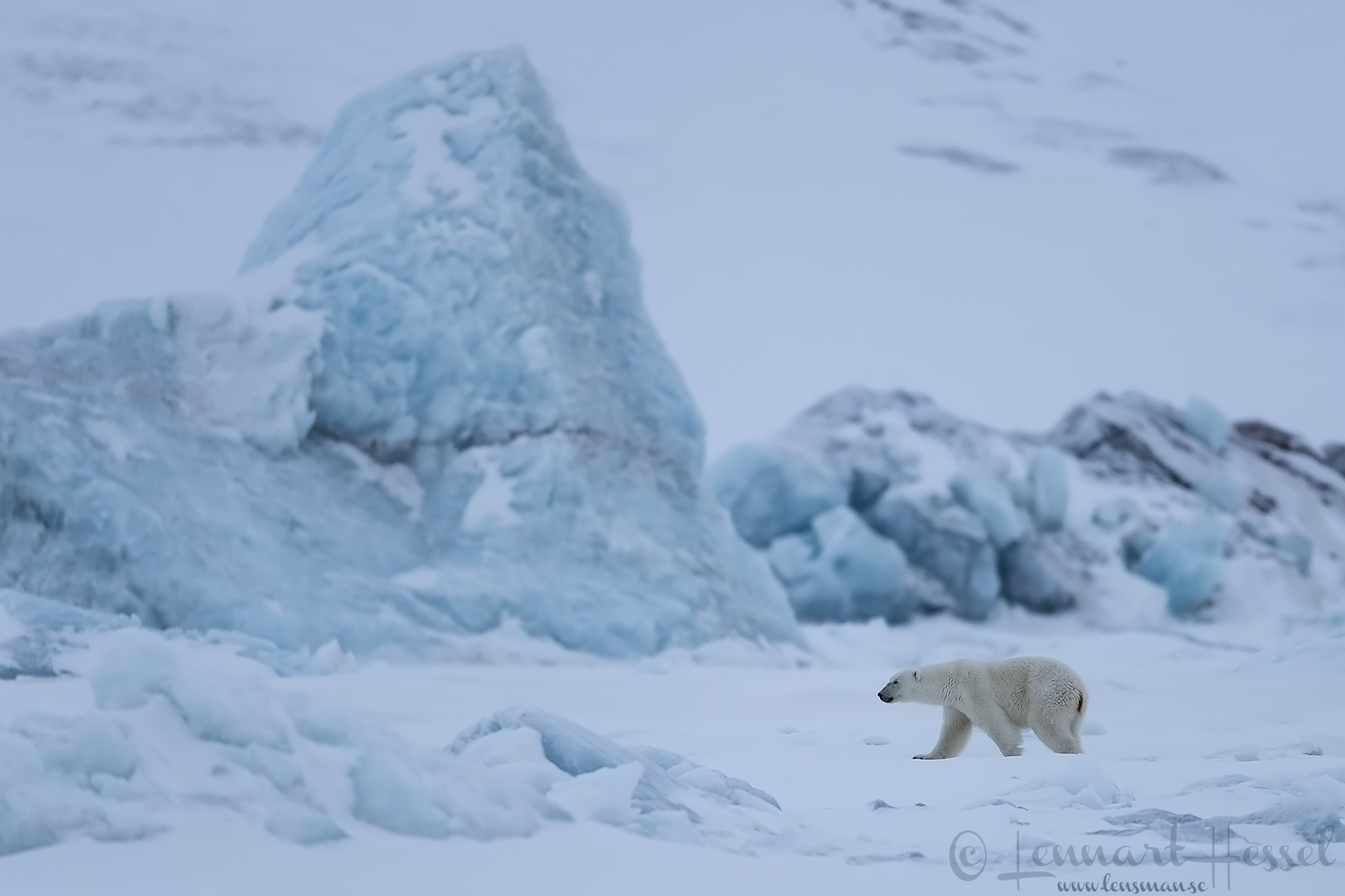 Polar bears Svalbard Arctic icebergs pack ice