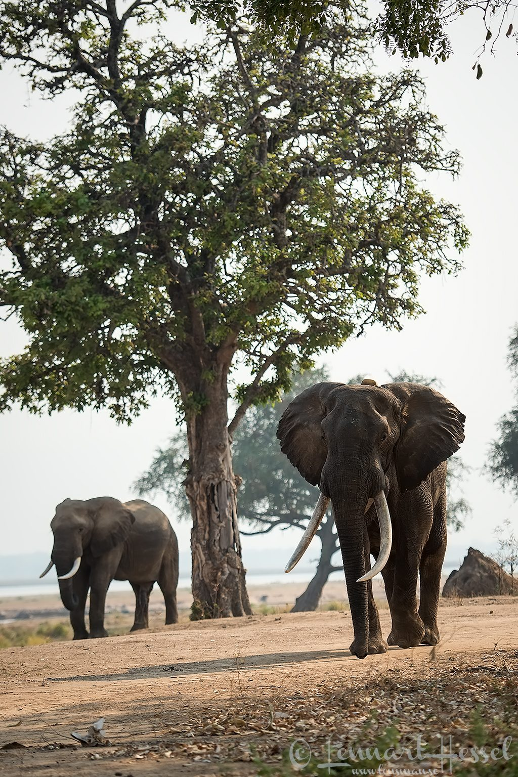 Boswell and Elephant Mana Pools National Park