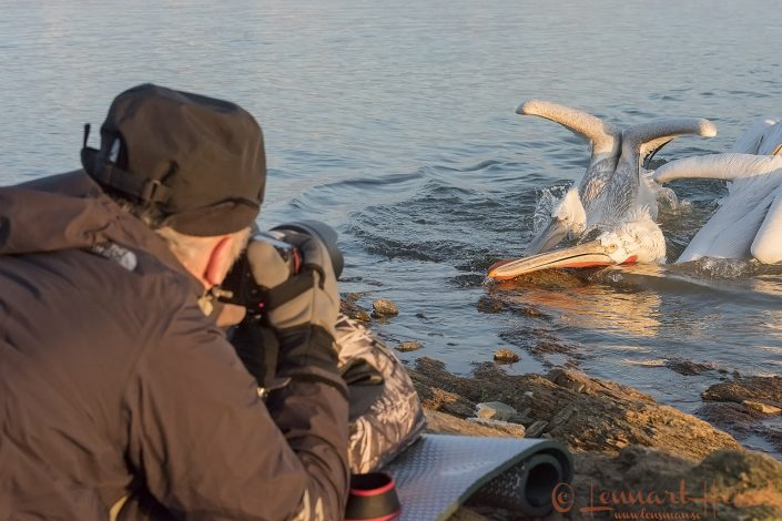 Dalmatian Pelican workshop Lake Kerkini