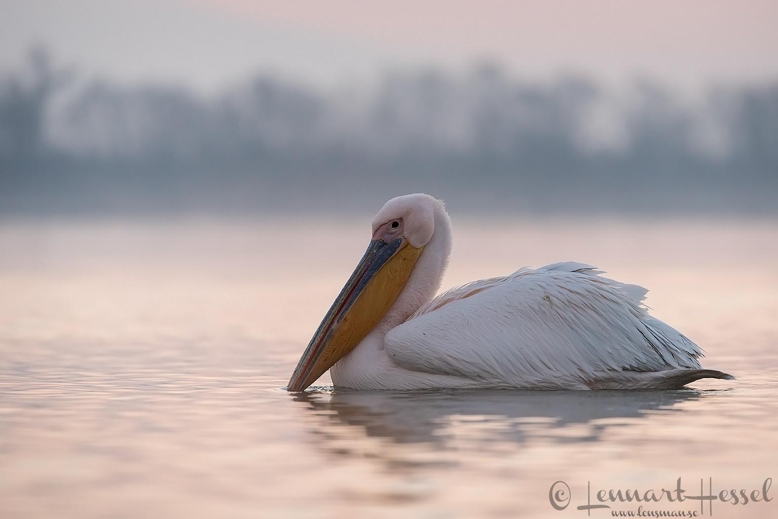 White Pelican Lake Kerkini