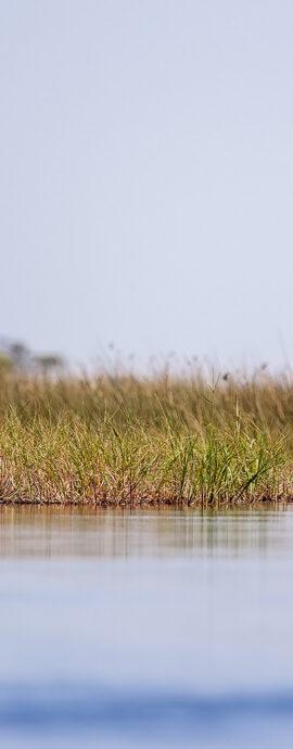 Okavango Delta 2011