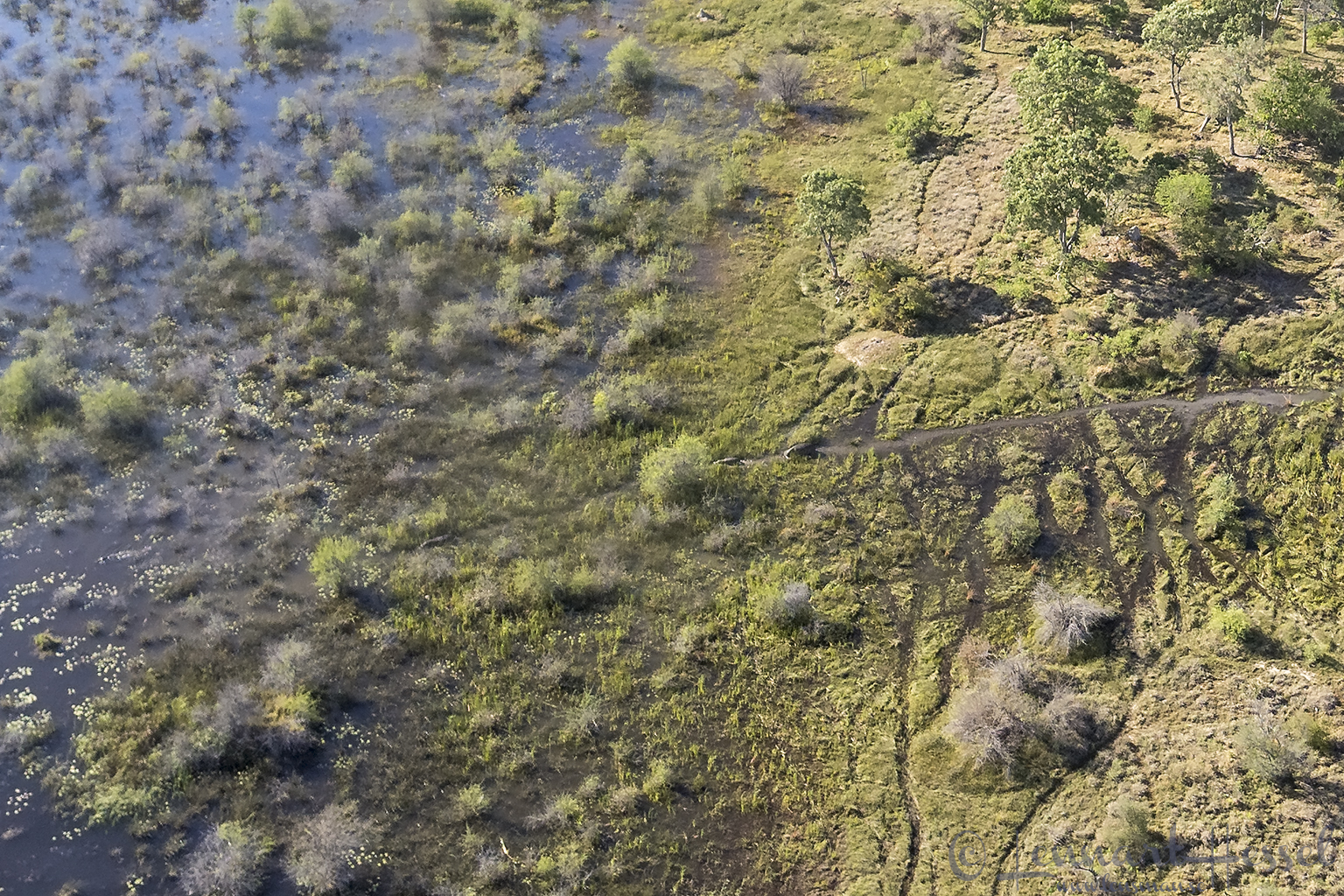 Hippo channel in the Okavango Delta, Botswana
