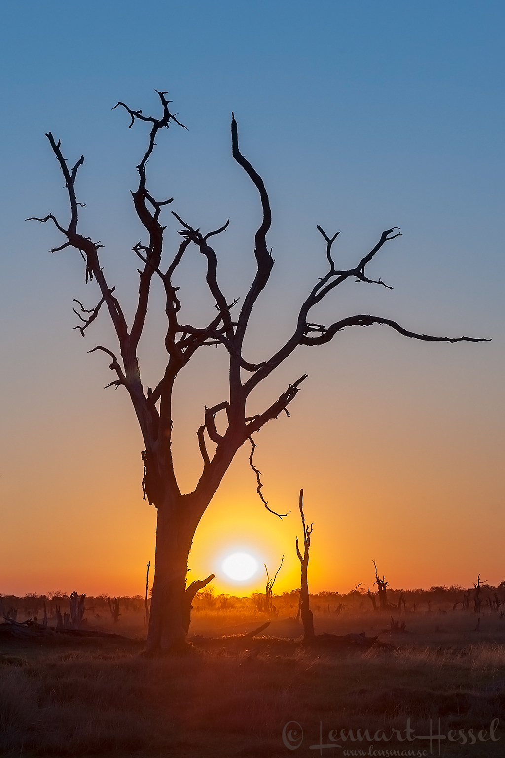 Sunset on the savannah in Moremi Game Reserve, Botswana