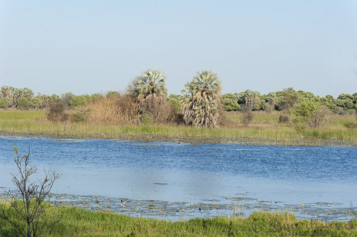 Thamalakane River seen from Thamalakane River Lodge, Botswana