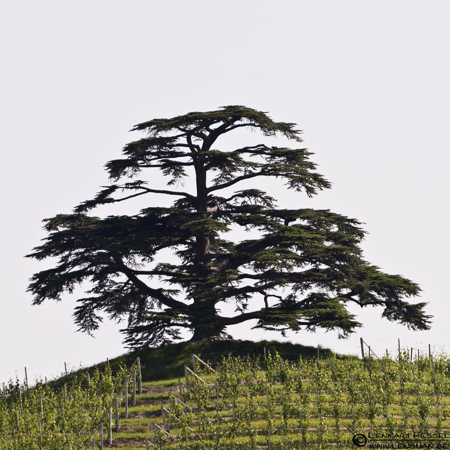 El Cedro in Piedmont, Italy
