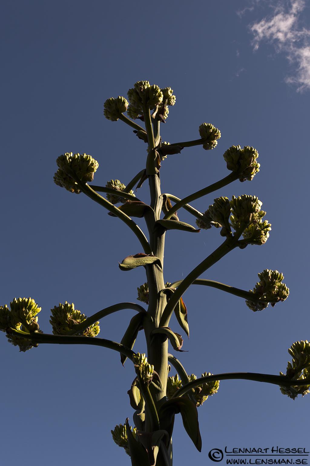 Plant at Lago Maggiore, Italy Piedmont