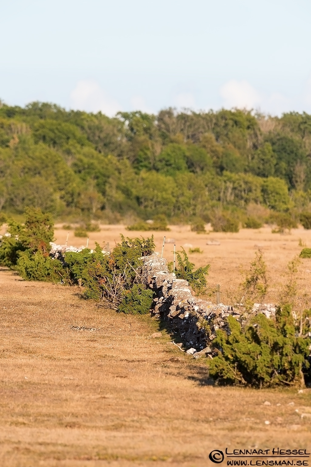 Typical scenery in Öland 2012