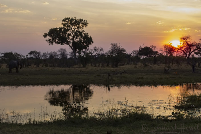 Elephant at sunset in Khwai Community Area, Botswana