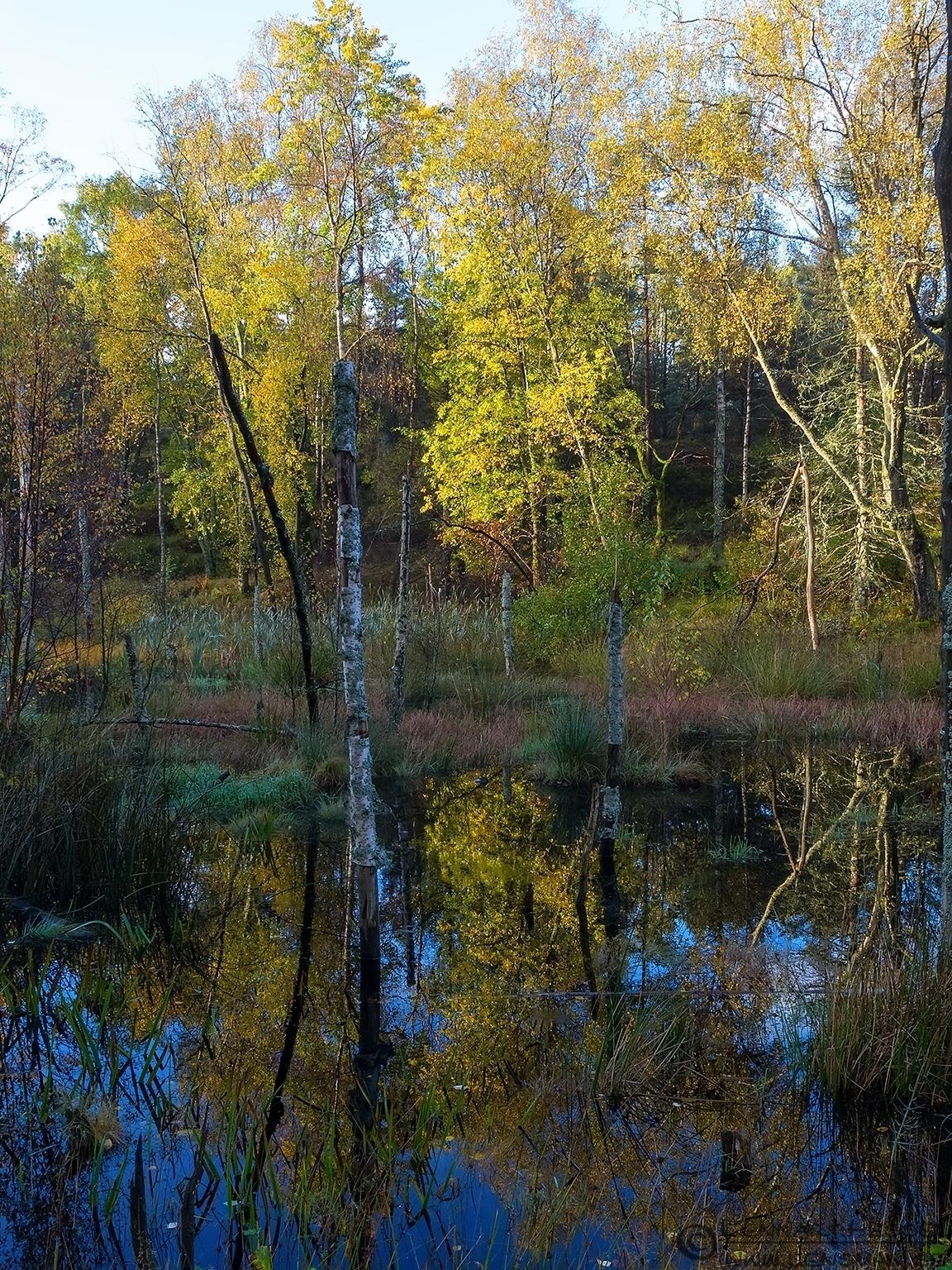 The pond along the road to Brudarebacken, Gothenburg