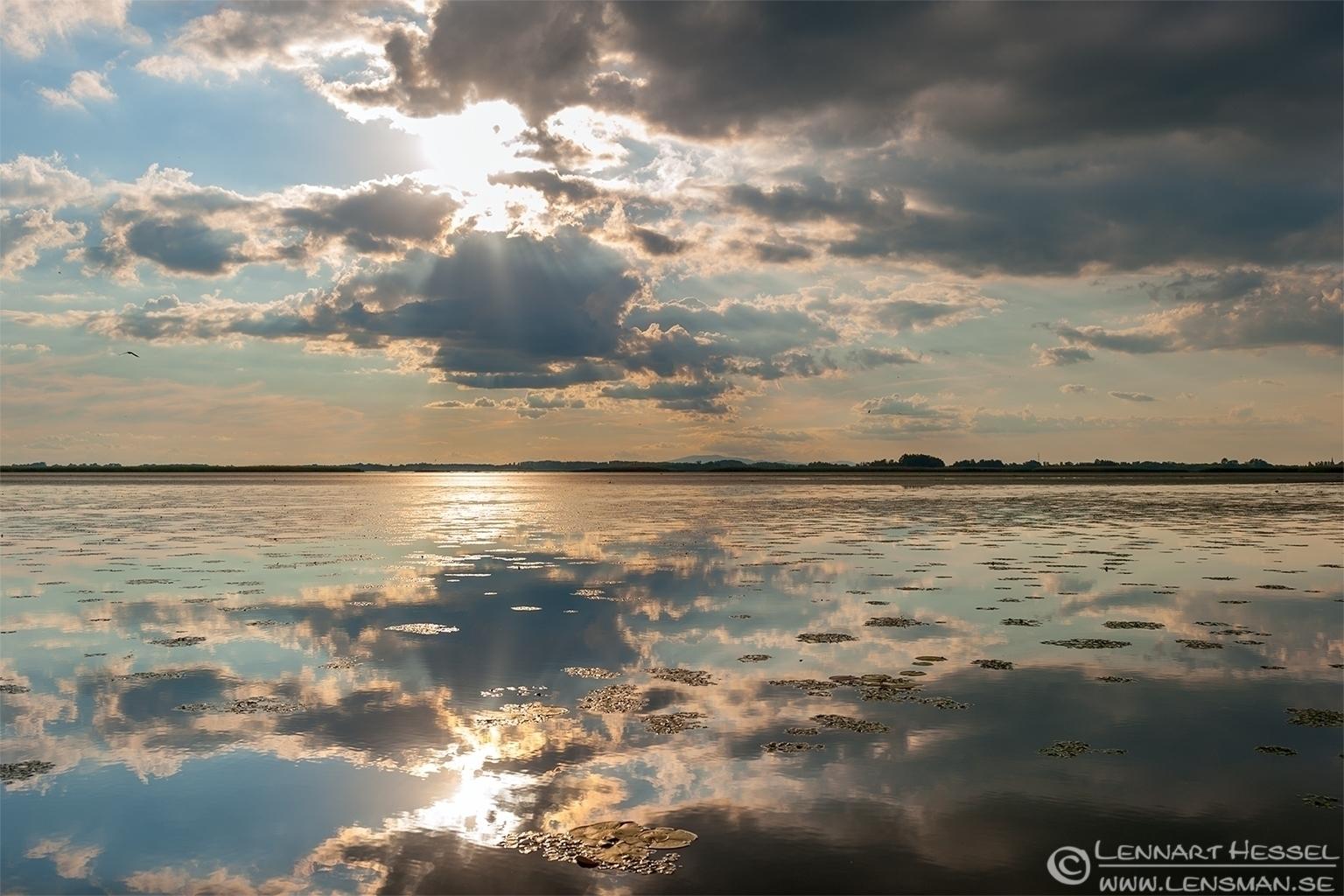 Lake Tisza home to the Whiskered Terns