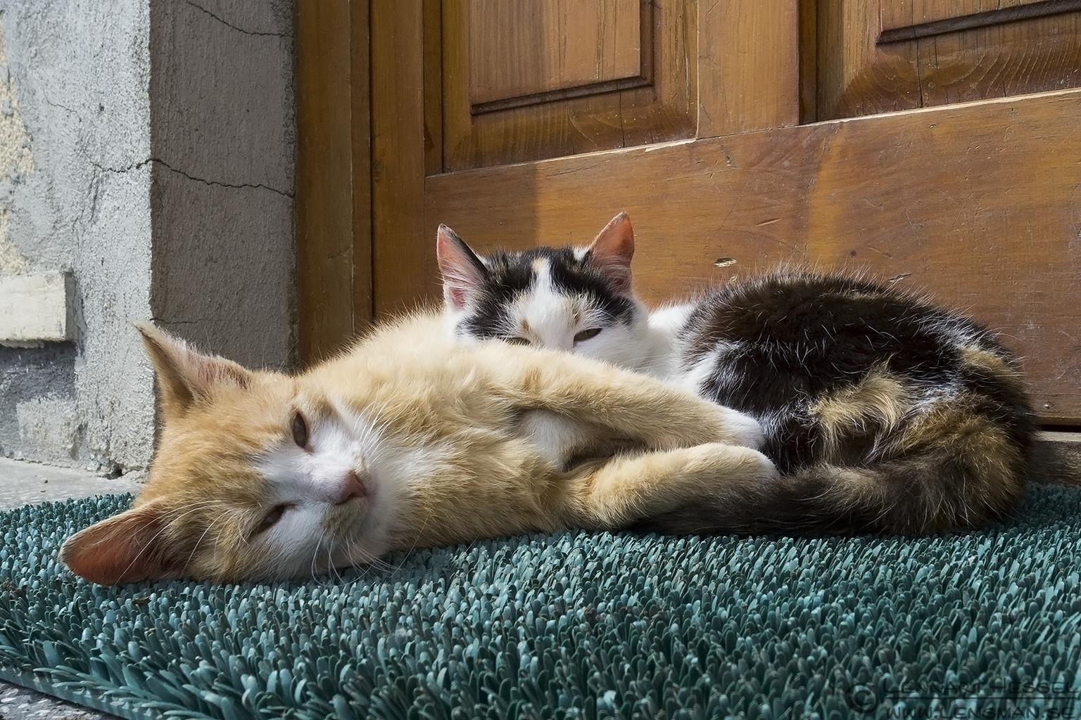 Kittens Transylvania, Romania