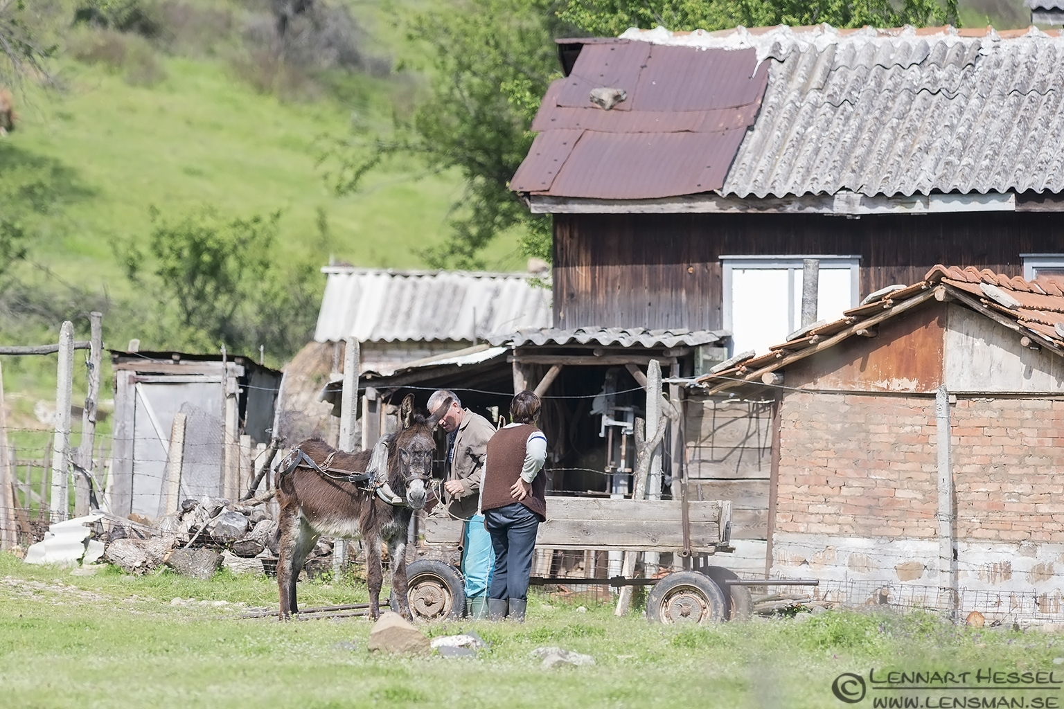 Preparing the Donkey in Bulgaria