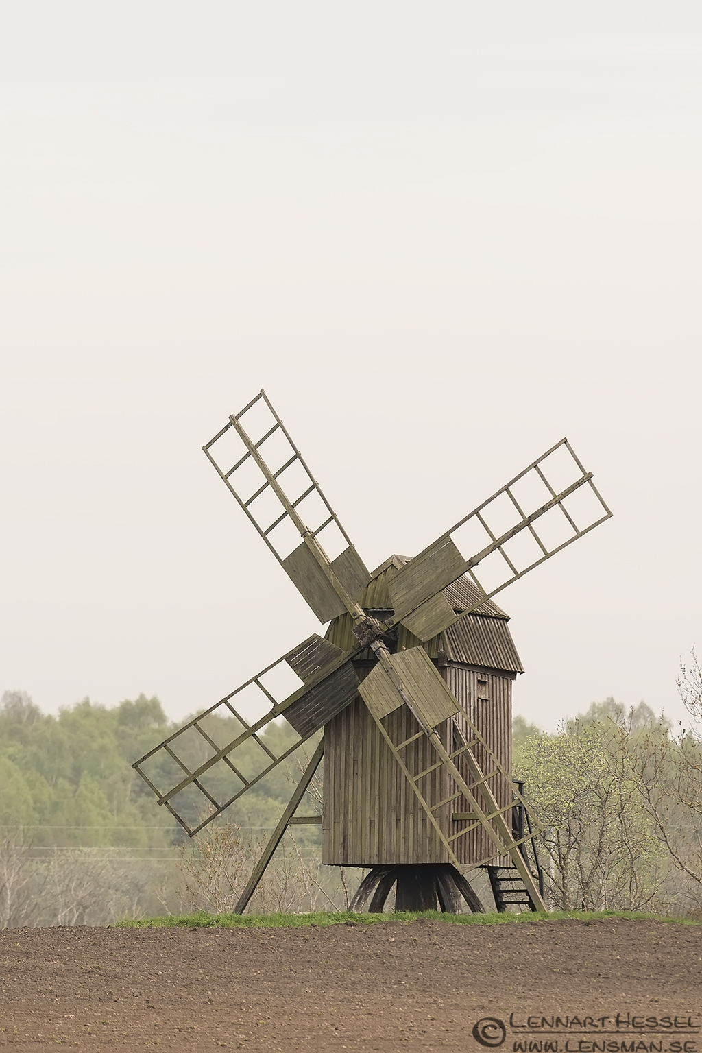 Wind Mill Goose