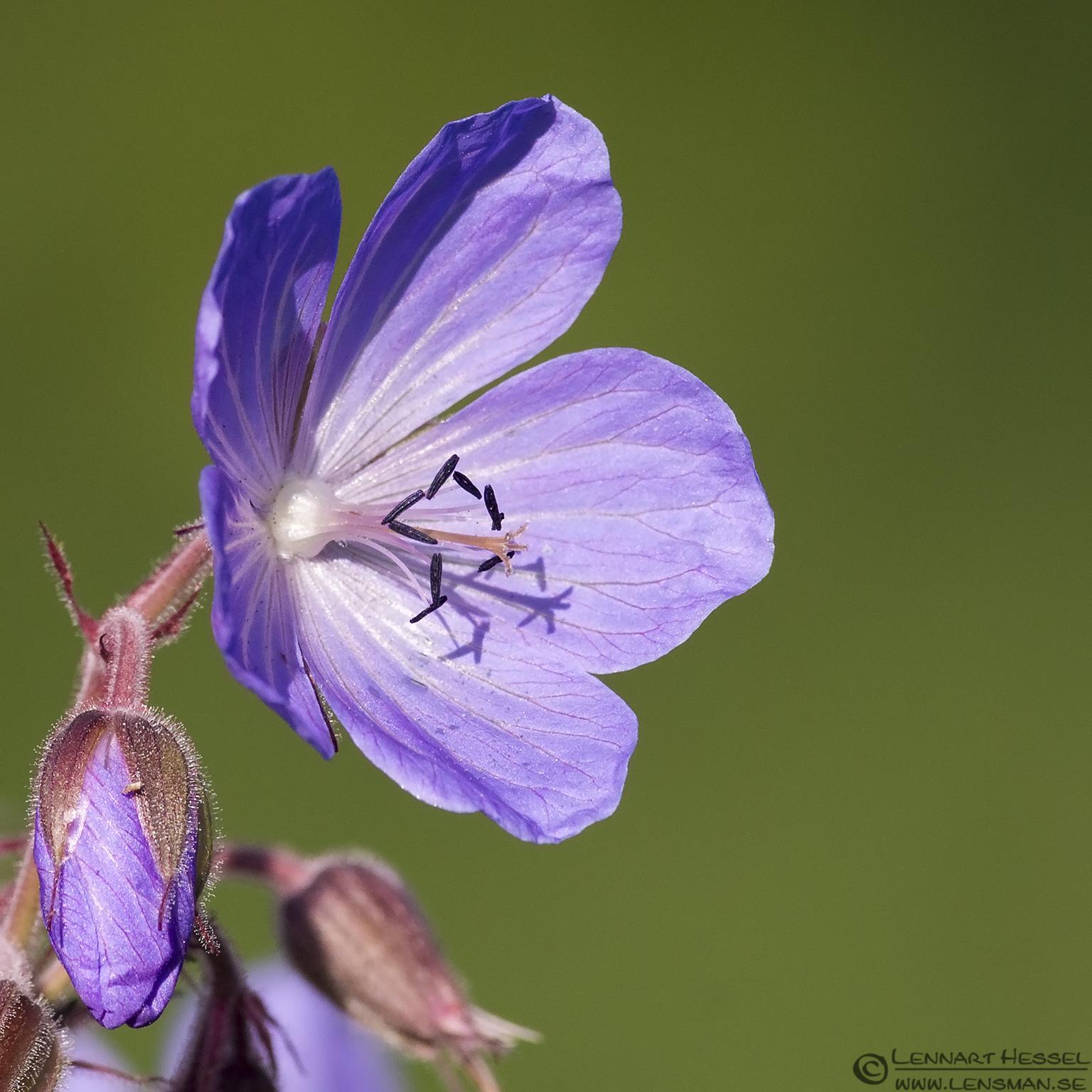 Flower visit West Gotland
