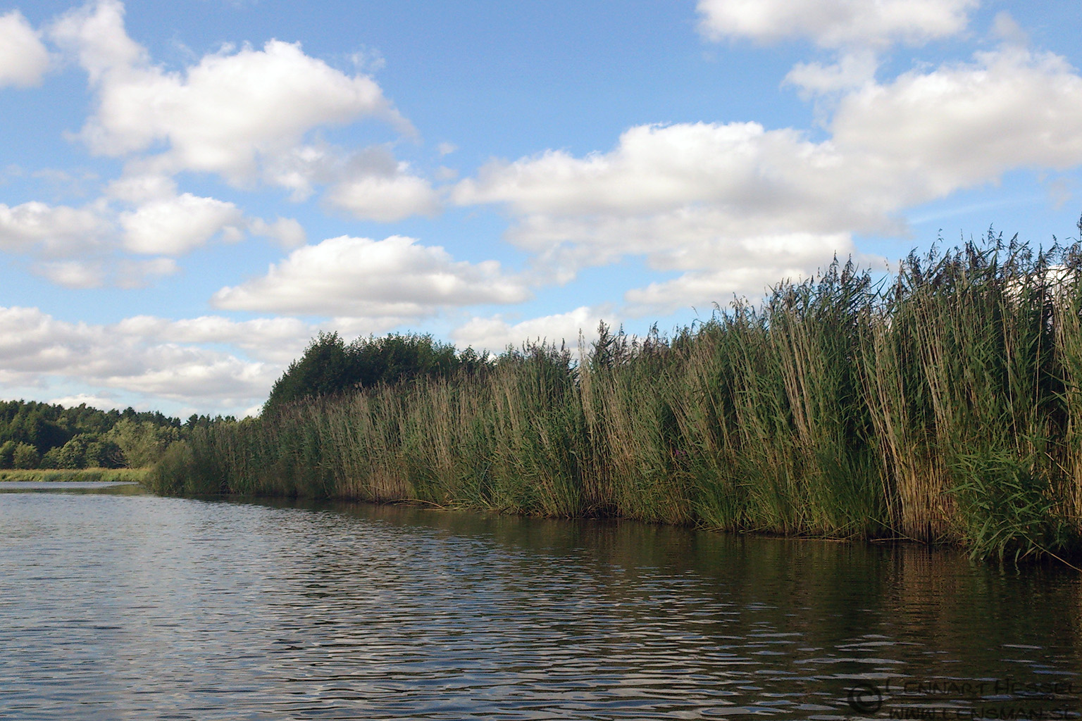Reed beds Nossan