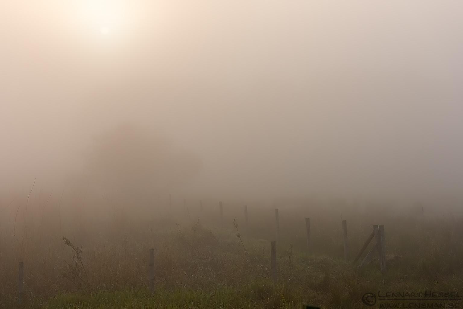 Fenches fog